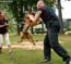 German Shepherd Schutzhund training