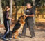 Schutzhund training in Tampa, FL