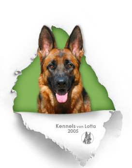 Imported German Shepherd Dogs are smart and beautiful