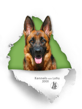 Imported female at Kennels von Lotta - great protection for the family