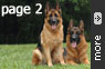 Our German Shepherd Dogs Gallery - part 2