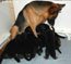 4 weeks old puppies and Nemka