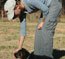 Training Coda (olive collar female) at 9 weeks old
